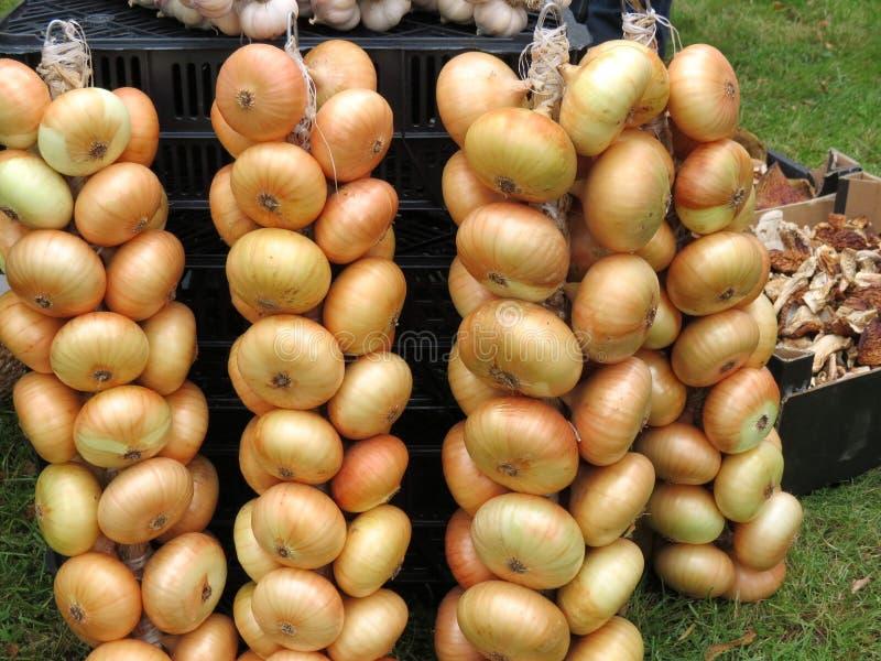 Download Onion string stock photo. Image of stuffs, onion, nature - 34706536