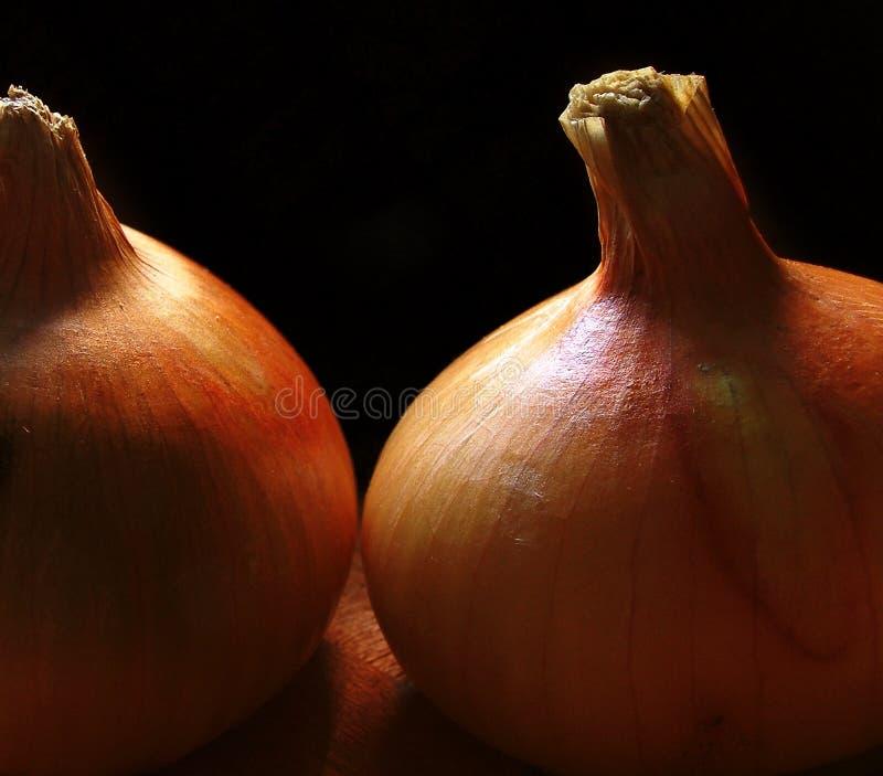 Onion study 1 stock photography