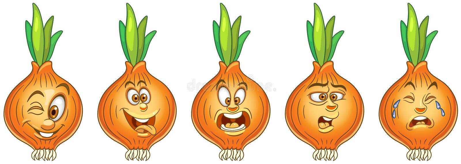 Onion. Vegetable Food concept stock images