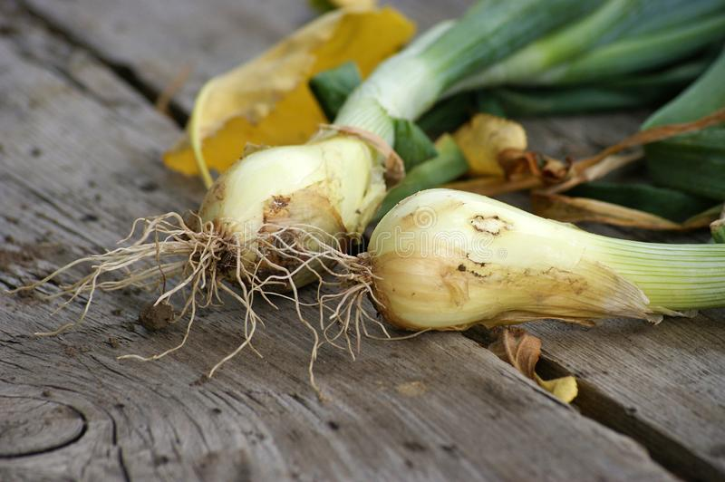 Onion on wooden table stock images