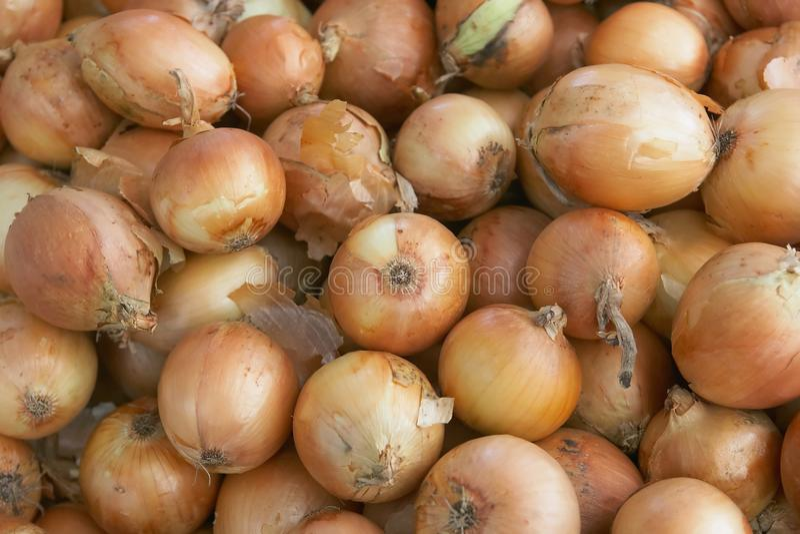 Download Onions stock photo. Image of onions, bulbs, leek, macro - 10927486
