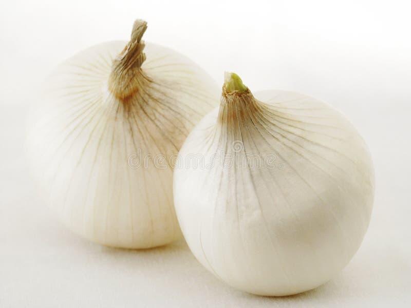 Download Onions stock photo. Image of double, leerics, beauty, food - 184748