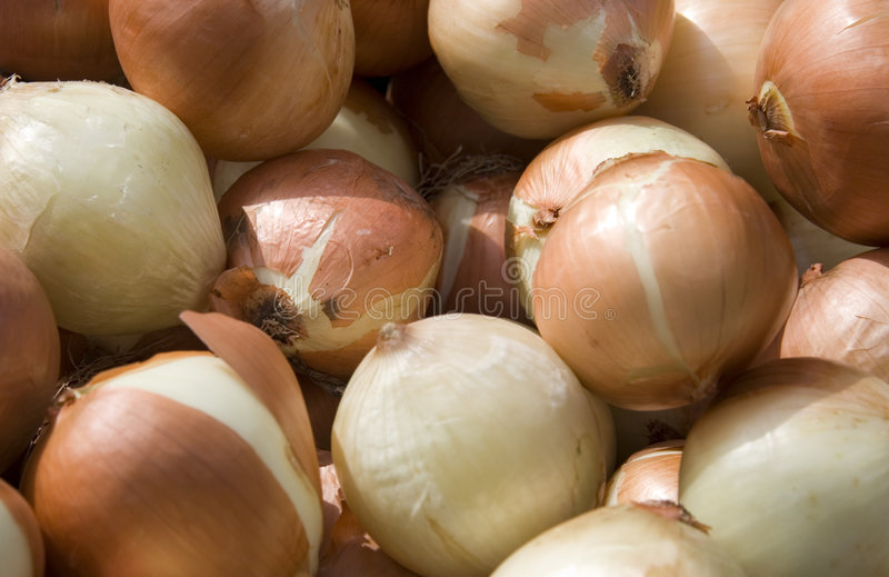 Download Onions stock photo. Image of smell, ripe, market, bulb - 2130186