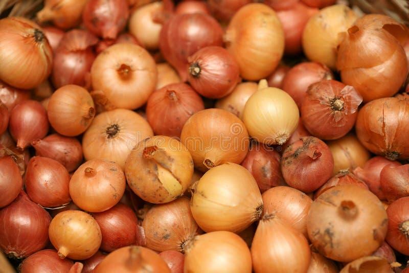 Onions royalty free stock photos