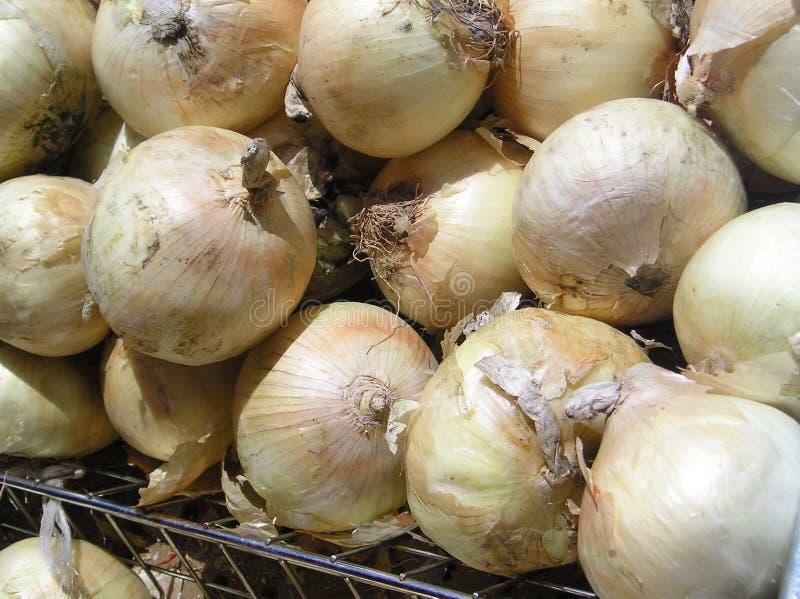 Onions Closeup. Closeup view of onions at an outdoor market stock photos