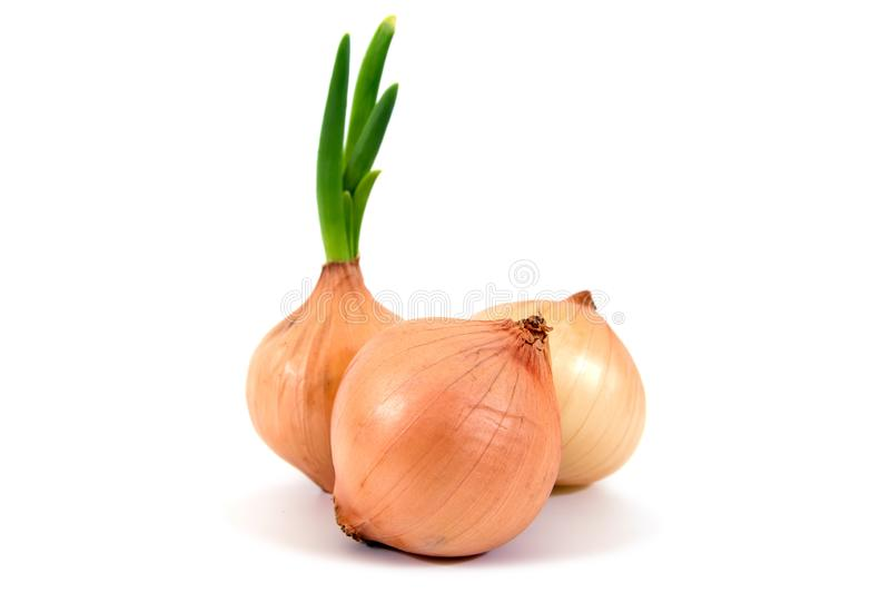 Onions isolated. Fresh onions with leaves isolated stock photography