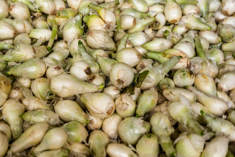 Onions at a market in Mexico. In summer stock photo