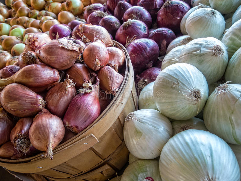 Onions. Onion varieties at the farmers market stock image