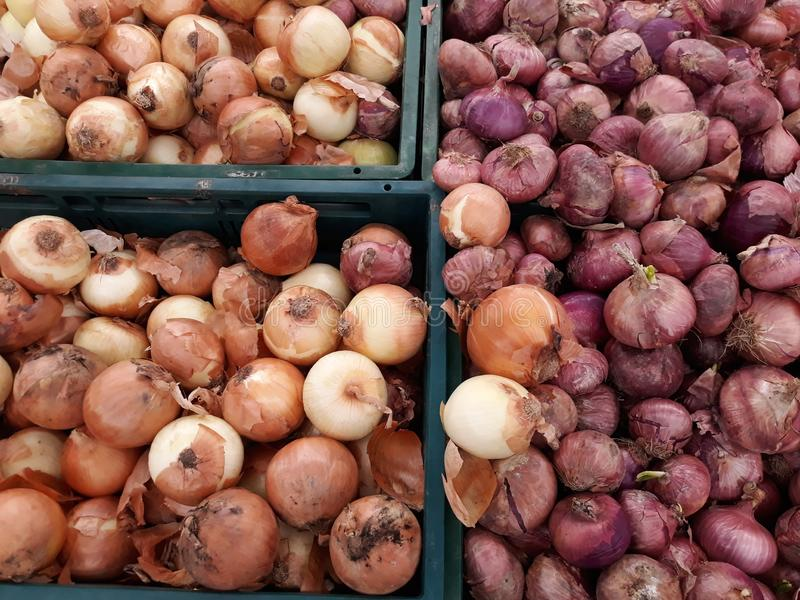 Onions and shallots in crates at food stores. stock photography