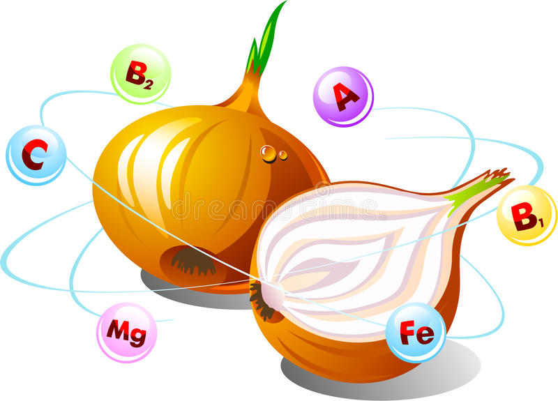 Onions with vitamins royalty free illustration