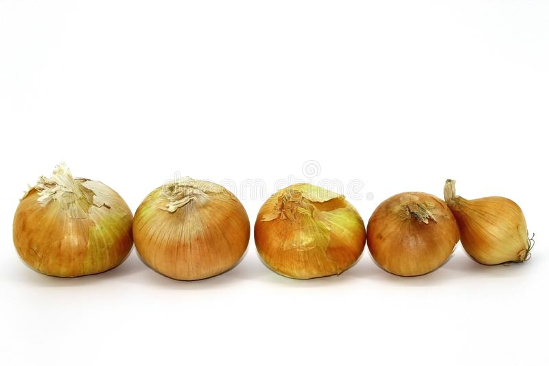 Onions winter placed in a row for growth on a white background royalty free stock photography