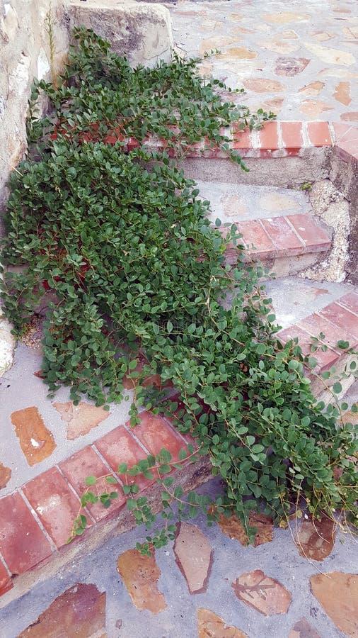 Onkruid die in steenstappen groeien met terracottarand royalty-vrije stock afbeelding