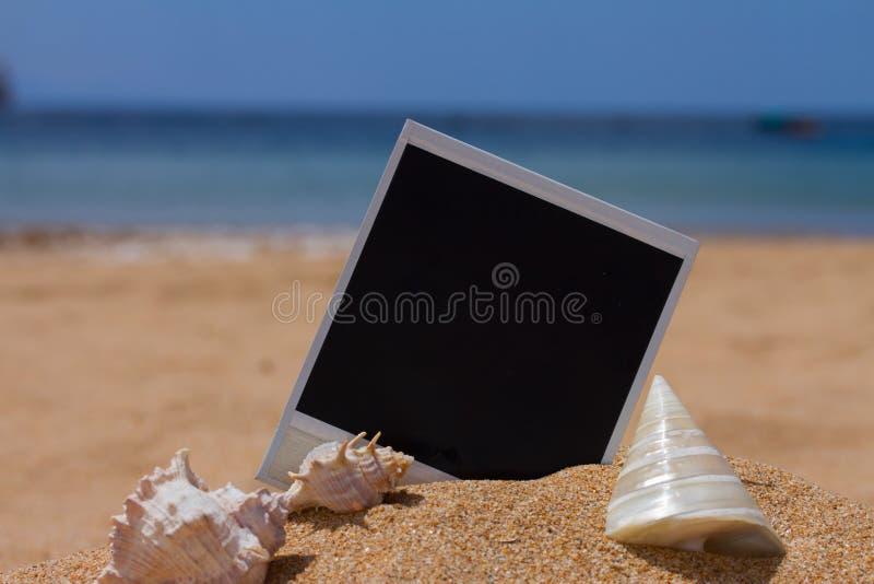 Onmiddellijke foto met seashels stock foto's