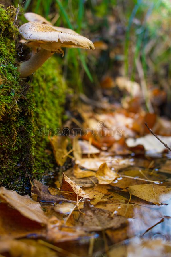 Ono rozrasta się w lesie na łóżku liście zdjęcie stock