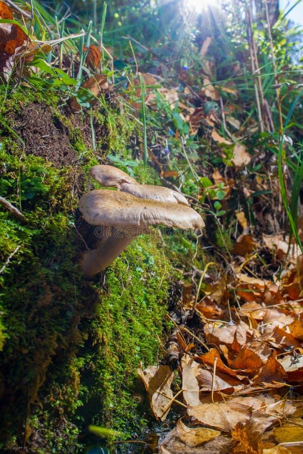 Ono rozrasta się w lesie na łóżku liście zdjęcia stock