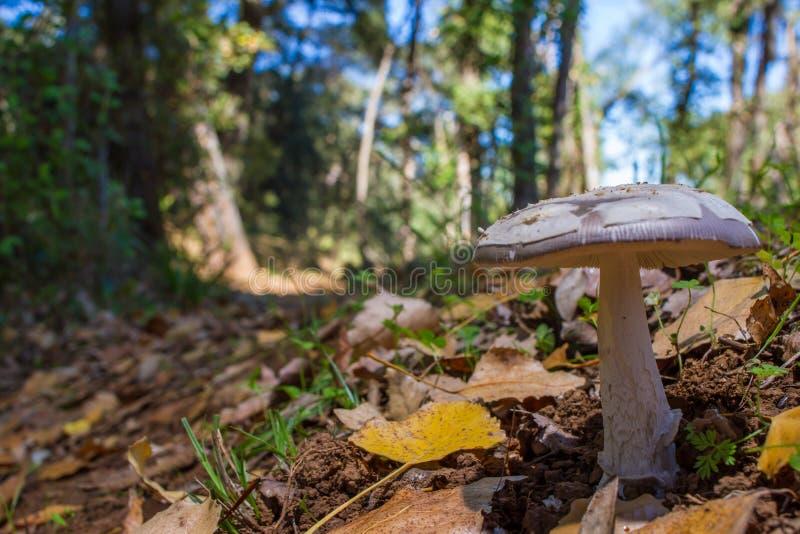 Ono rozrasta się w lesie na łóżku liście obraz stock