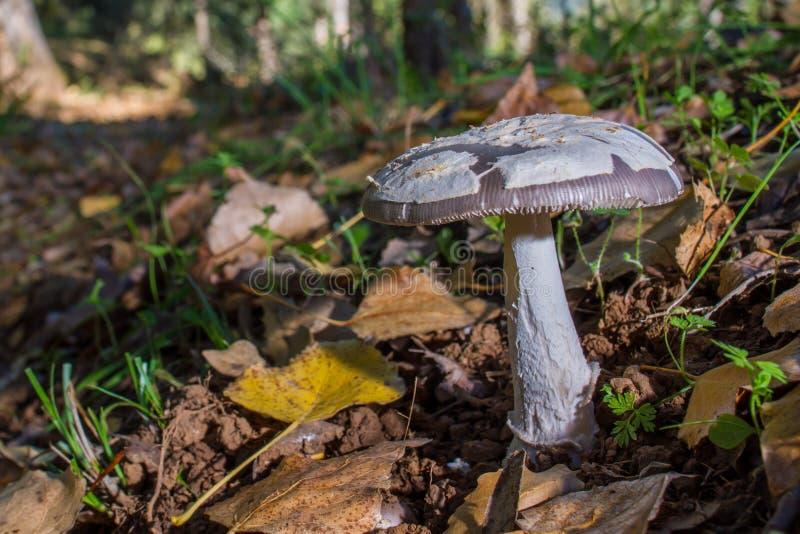 Ono rozrasta się w lesie na łóżku liście obrazy stock