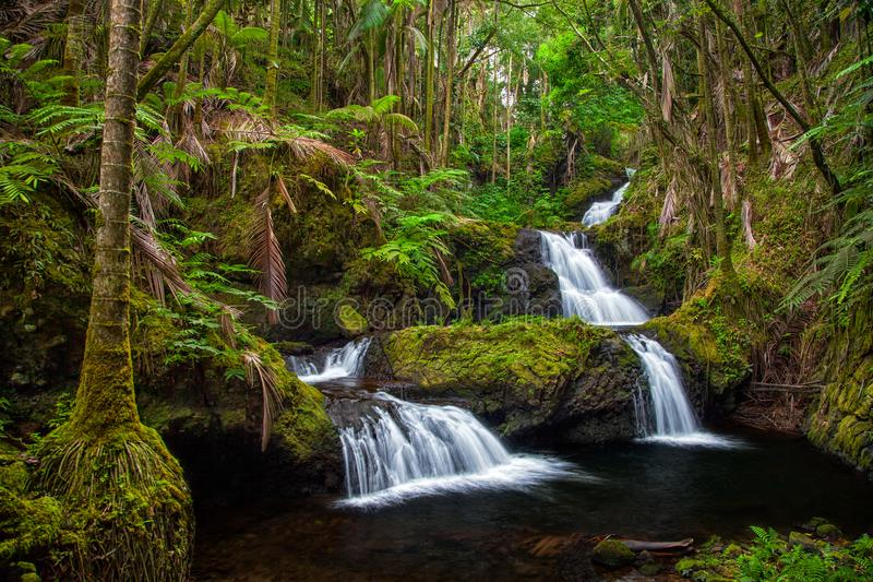 Onomea nedgångar i Hawaii arkivfoton