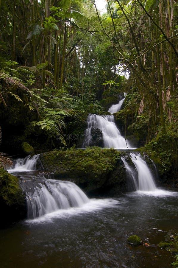 Onomea vattenfall i den tropiska botaniska trädgården av Maui royaltyfri foto