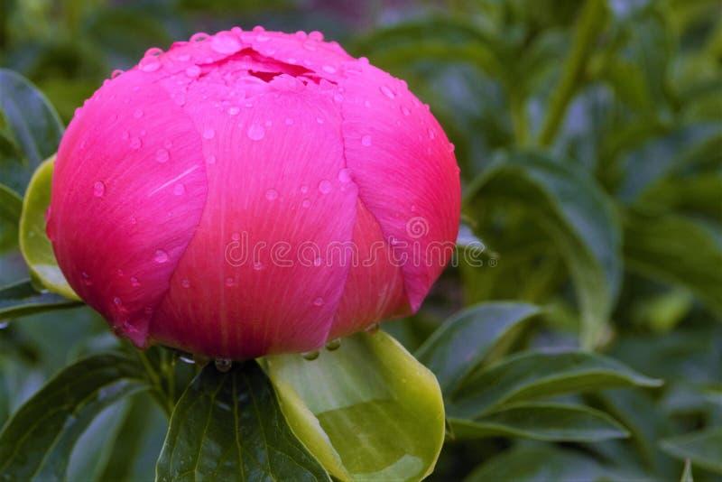 Onontloken bloem stock fotografie