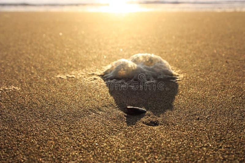 Onormalt skum på stranden förorening av havet, giftiga urladdningar salta skum som gyttras ihop på sanden av en strand på solnedg fotografering för bildbyråer