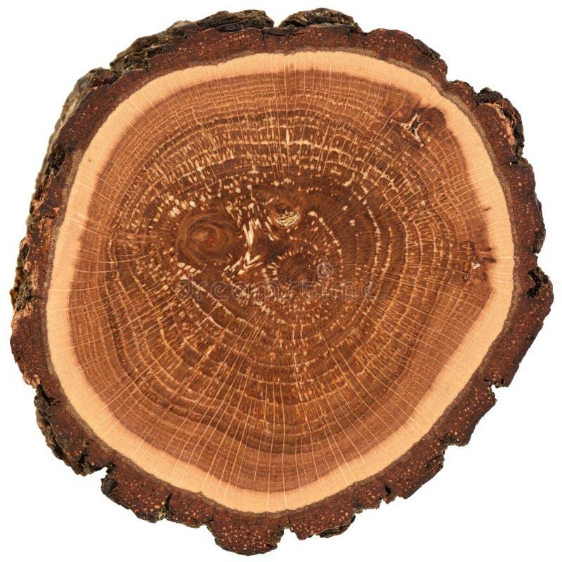 Onregelmatige vorm houten plak met schors en boom de groeiringen Kleurrijke eiken die plaktextuur op witte achtergrond wordt geïs stock foto