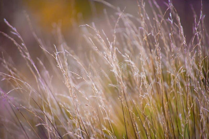 Onscherp Gras stock foto