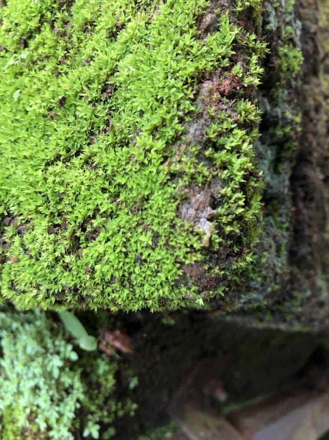 Onscherp groen mos stock foto's