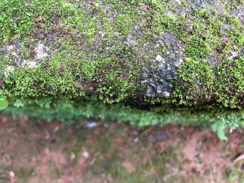 Onscherp groen mos royalty-vrije stock fotografie