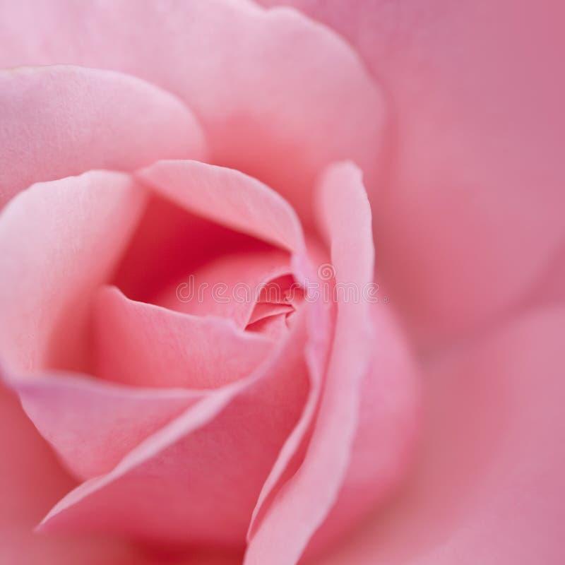 Onscherp nam bloem toe royalty-vrije stock foto