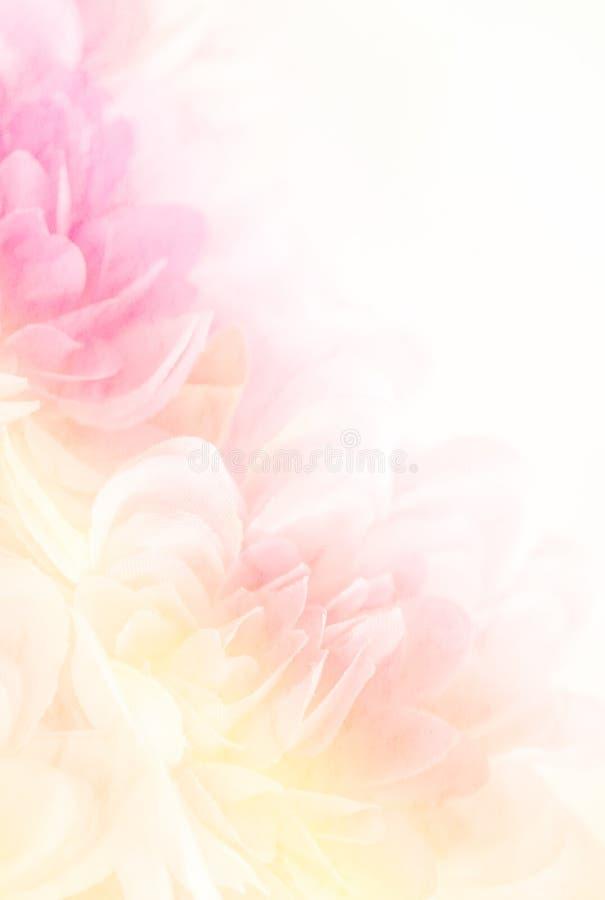 Onscherp van bloem op moerbeiboomdocument met exemplaarruimte voor backgorun stock fotografie