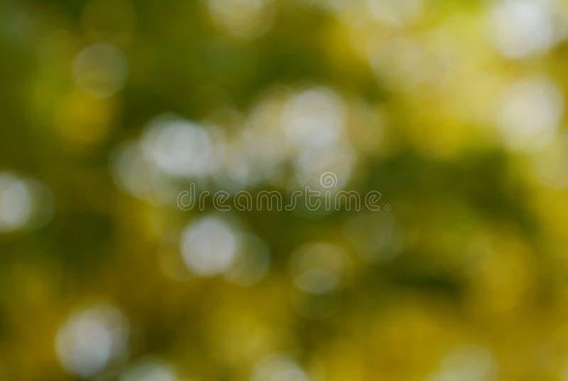 Onscherp van installatie op tuin abstracte achtergrond royalty-vrije stock afbeelding