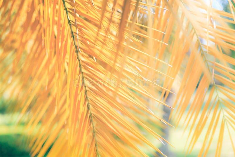 Onscherpe achtergrond, geel palmblad stock fotografie