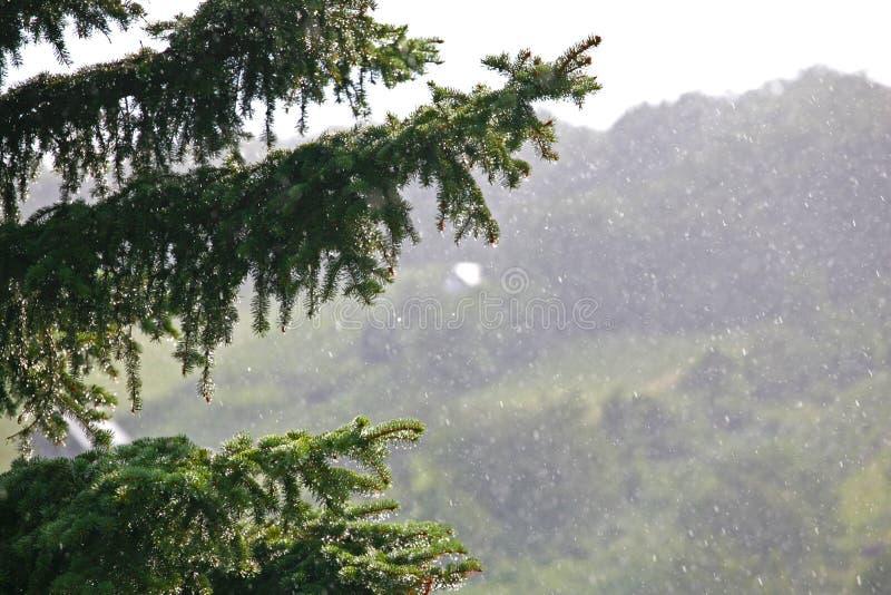 Onscherpe heuvel in regen met pijnboom en druivenbladeren royalty-vrije stock fotografie