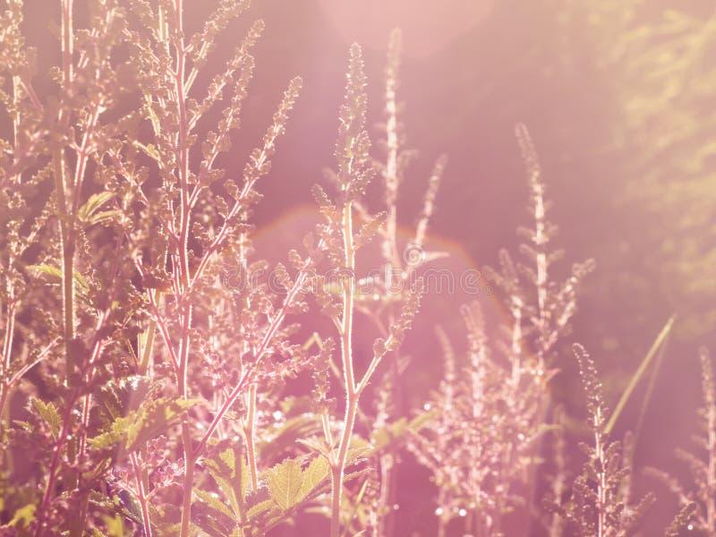 Onscherpe uitstekende weide, gras in zacht zonlicht, gestemd beeld, stock foto's