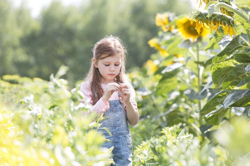 Onschuldig meisje die zich door zonnebloeminstallaties bij landbouwbedrijf bevinden stock fotografie