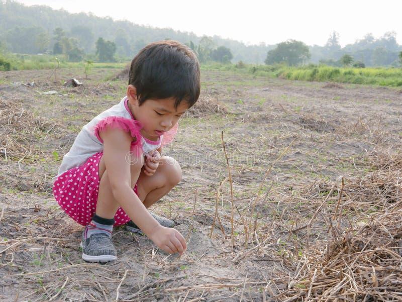 Onschuldige weinig Aziatisch babymeisje die droge grassen proberen ter plaatse te planten om hen levend te houden stock fotografie