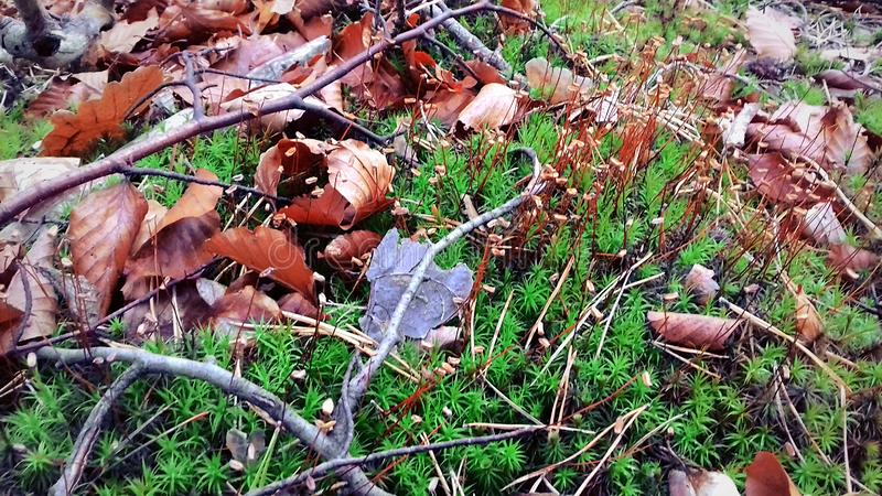 The onset of autumn. The leaves have already fallen. Green grass stock photo