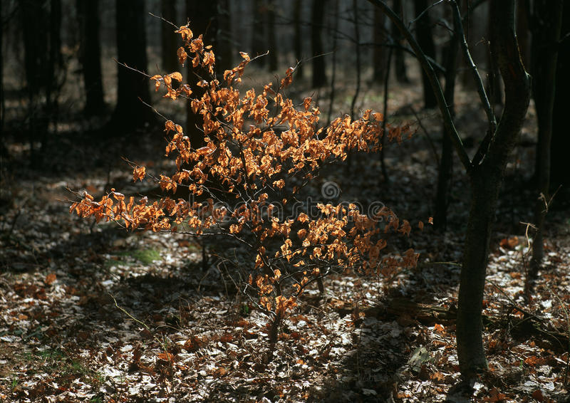 Download Onset Of Spring In The Woods Stock Image - Image: 23690161