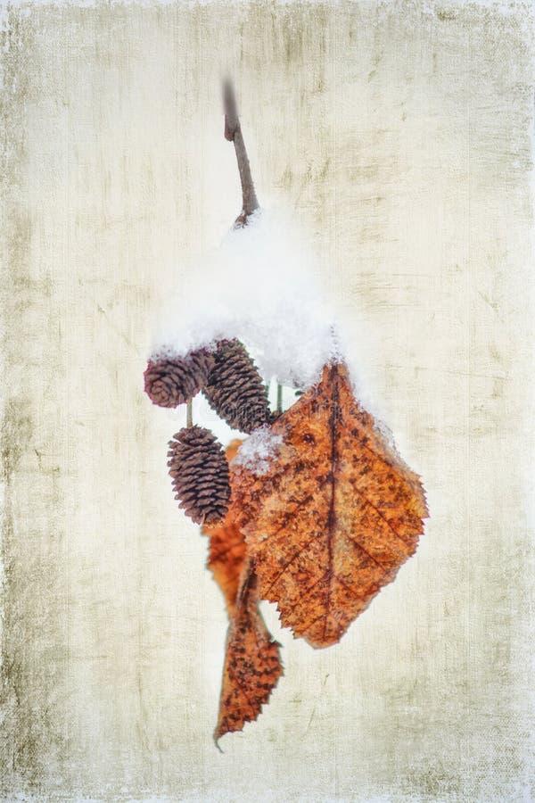 Ontano rosso - foglie innevate illustrazione vettoriale
