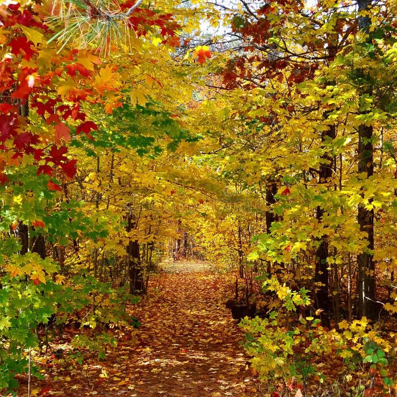 Ontario Fall stock image