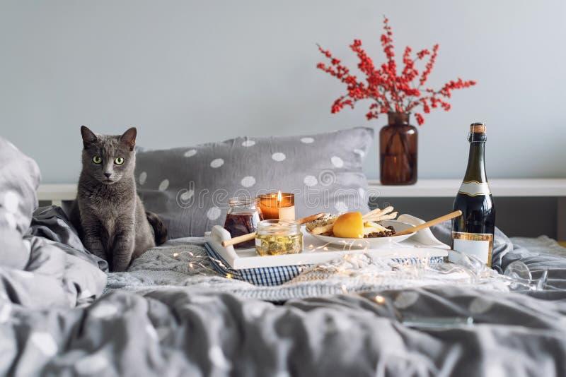 Ontbijt in bed, een dienblad met kaas, grissini, jam van jonge sparappel, champagne en een kaars Grijze kat in bed royalty-vrije stock afbeelding