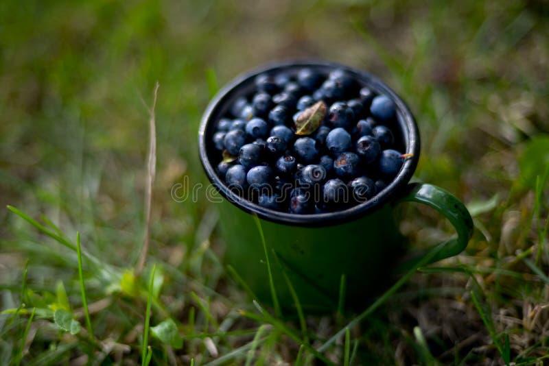 Ontbijt op het gras royalty-vrije stock foto