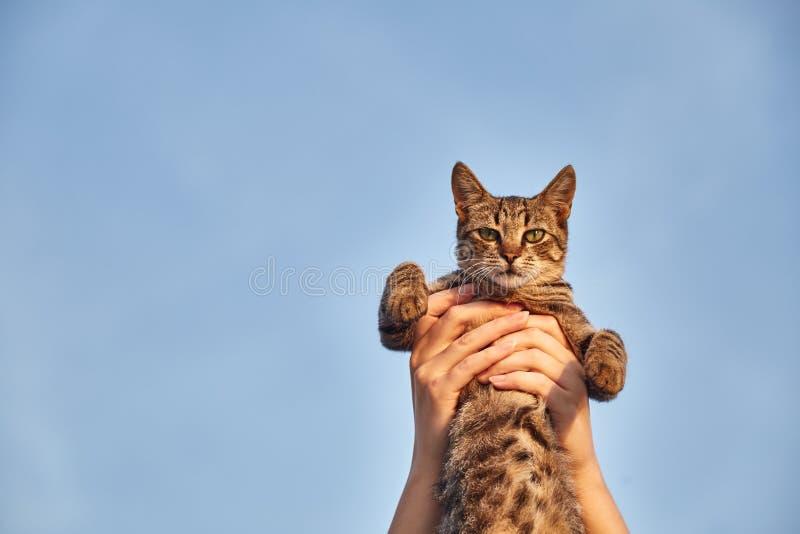 Ontevreden kat ter beschikking Leuke kat De kat van de meisjesholding in haar wapens stock foto