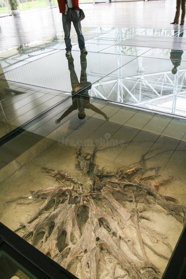 Ontgraven ebbehout bij de show in het museum, chengdu, China royalty-vrije stock afbeeldingen