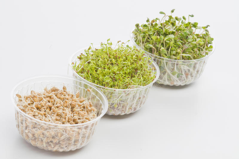 Ontkiemde zaden van tuinkers, radijs, tarwe stock afbeeldingen