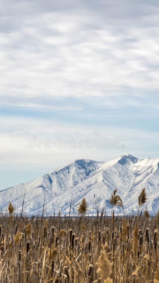 Ontruim Verticaal Enorm grasrijk terrein tegen een ruwe berg die met sneeuw in de winter wordt behandeld royalty-vrije stock afbeeldingen