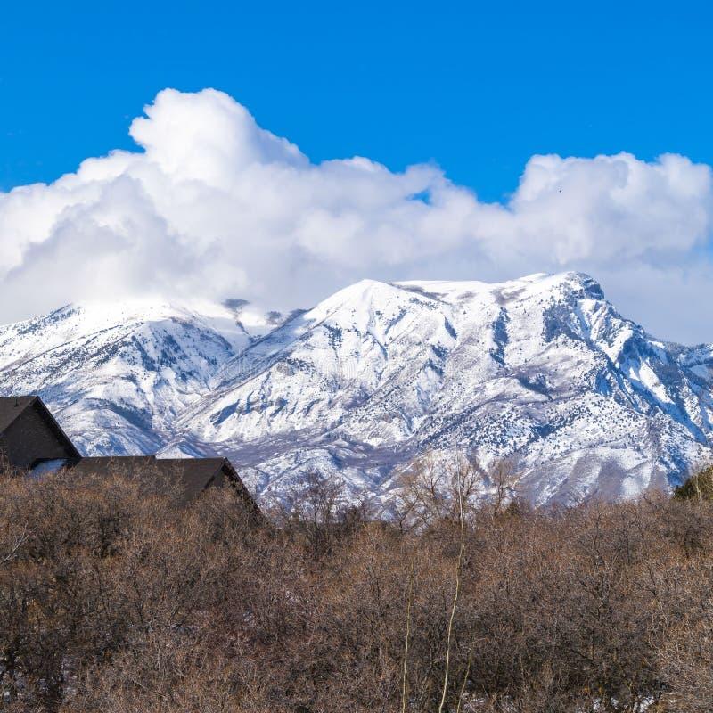 Ontruim Vierkant die Dak van een huis over de rij van leafless hibernerende bomen in de winter wordt gezien stock foto's