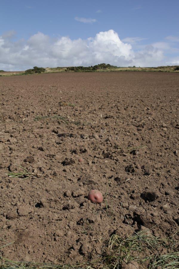Ontruimd aardappelgebied stock afbeeldingen