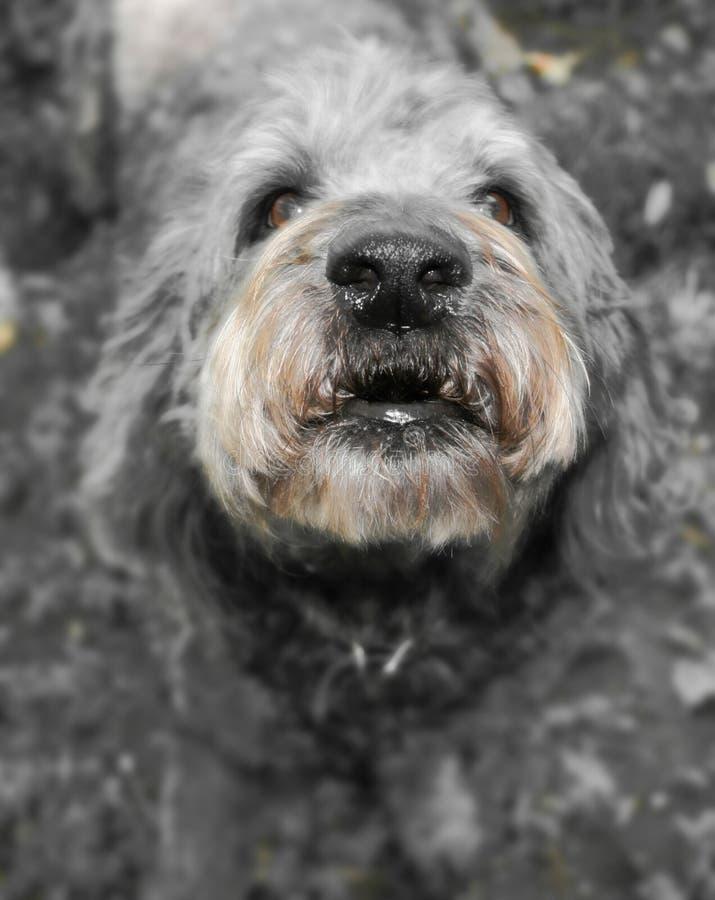 Ontschorsende buurthond royalty-vrije stock afbeeldingen